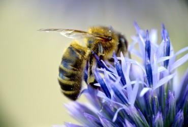 Bienenweiden – Wichtige Nahrungsquelle für Insekten